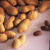 O amendoim é um alimento rico em proteínas