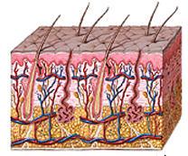 Proteína relacionada com a diabetes e eczema