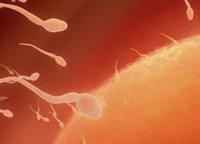 Fertilidade e proteína associada