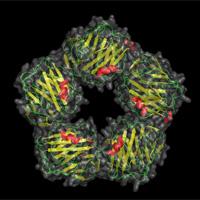 O que é Proteína C-Reativa