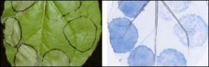 Proteínas e do sistema imune