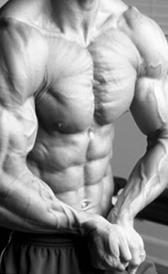 Proteína e massa muscular