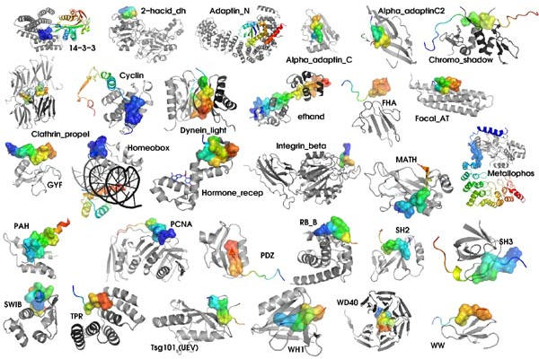Vários tipos de moléculas que são proteínas