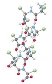 Proteínas estruturais