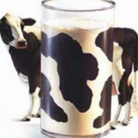 As proteínas do leite depende da vaca
